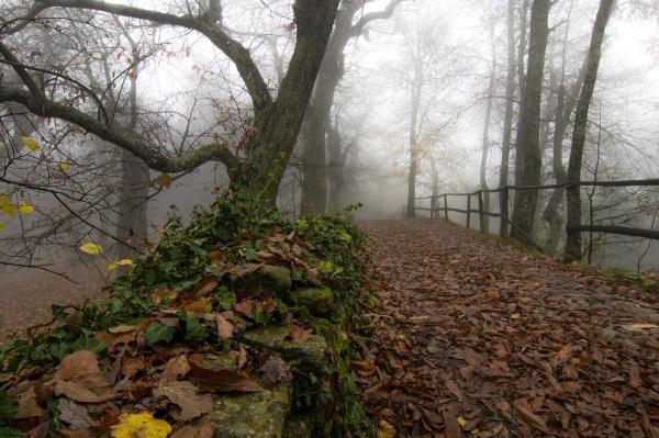 Late-autumn-humid-park
