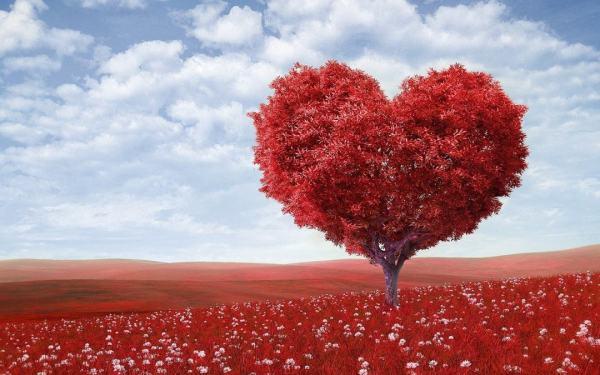 heart-shape-1714807_1280-min